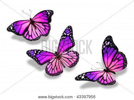 imagenes mariposas violetas mariposas violetas fondo imagui