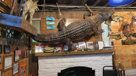 gator dining cus alligator org the large gator in the dining area picture of linger