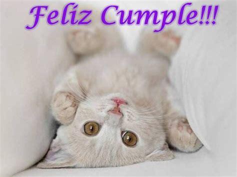 google imagenes de gatos imagenes de gatos tiernos cumplea 241 os buscar con google