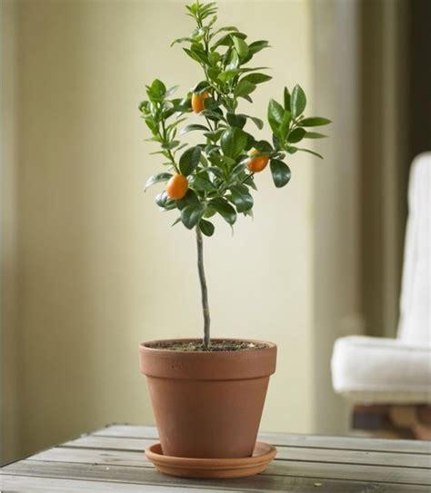 Indoor Tree Planter by Concept For Indoor Tree Planter Box Homesfeed
