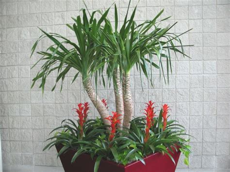 hawaiian house plants tropical house plants photo
