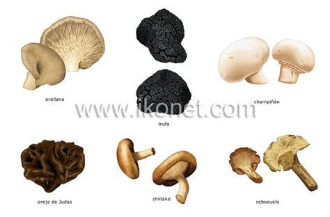 imagenes hongos ingles productos alimenticios y de cocina gt productos