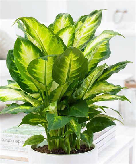 cura piante appartamento piante da appartamento quali scegliere e come prendersene