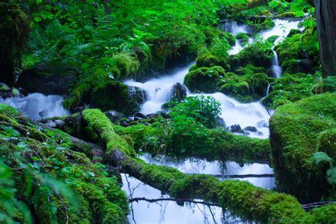 pur natur nature photograph by yoshisato