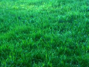 Green Grass by Green Grass Background Free Images