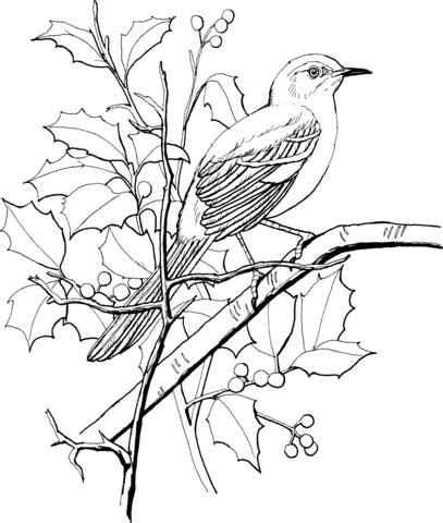 northern mockingbird perched on a tree coloring page