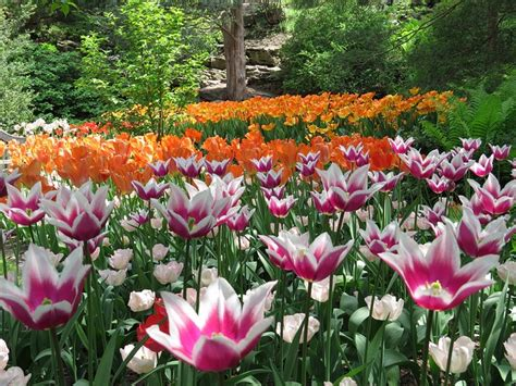 17 Best Images About Canadian Gardens Flowers On Hamilton Botanical Garden