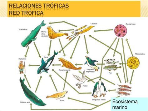 ejemplos de cadenas troficas con nombres cadenas tr 243 ficas