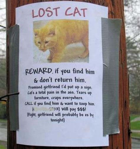 Finding Lost Anorak Reward For Not Finding My Lost Cat