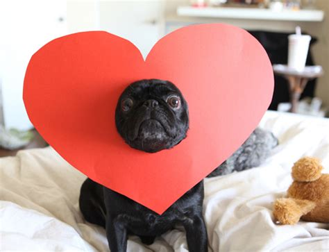 pug lover pug on pugs pug rescue and valentines day