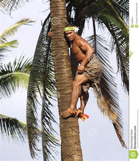 palm tree climber editorial stock image image 9480614