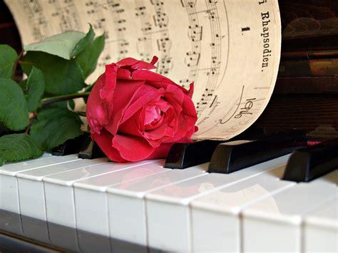 red rose flower white  sheet  piano keys  image peakpx