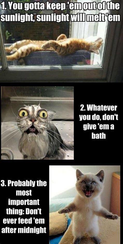 Weird Cat Meme - funny cat meme bajiroo com