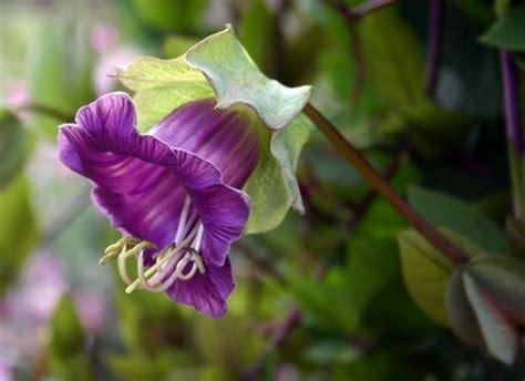 piante da giardino fiorite piante fiorite piante da giardino piante che producono