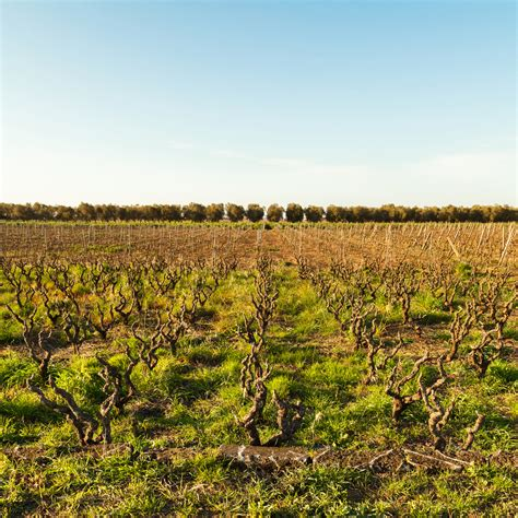 best value italian wines puglia wine is italy s secret to value wine folly