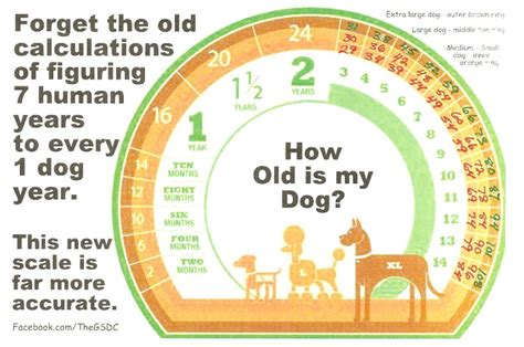 what is years to human years senior pet health when is my pet considered a senior and why it s important
