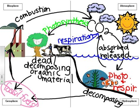 Carbon Cycle Miss Lagas