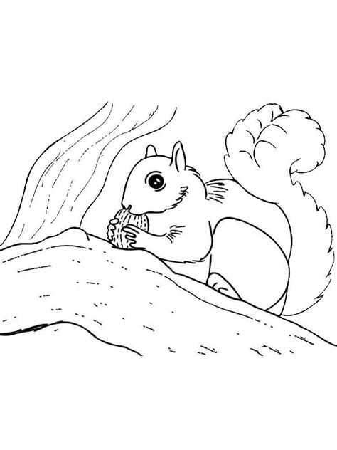 squirrel monkey coloring pages squirrel monkey coloring pages coloring pages