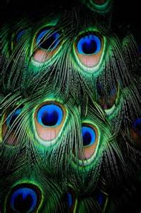 animal textures on sea urchins feathers and peacock feat