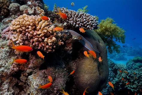 Underwater Garden by Underwater Garden
