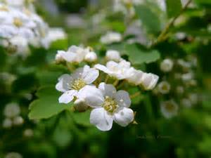 white flower bush my wall