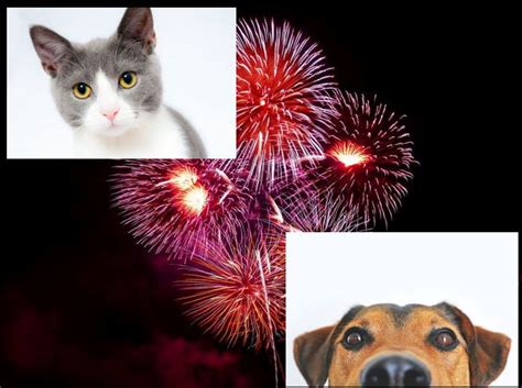 how to calm a during fireworks how to keep your pets calm during fireworks rekord east