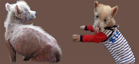 Mittel Gegen Hunde 233 by Mittel Gegen Hunde Mittel Gegen Zecken Hund Gegen Die
