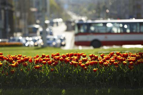 piante fiorite perenni per aiuole aiuole fiorite perenni con le graminacee in citt 224 non