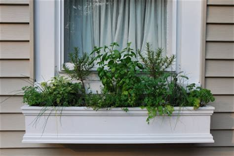 herb window box the princess and the frog a window box herb garden