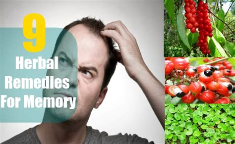 9 herbal remedies for memory herbs for memory