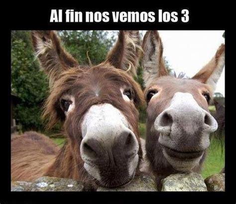 imagenes graciosisimas im 225 genes divertidas de burros