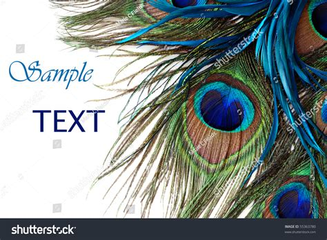 Can I Get A Copy Of My Background Check Beautiful Peacock Feathers On White Background With Copy Space Stock Photo