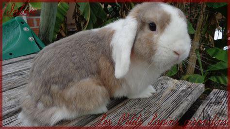 mes lapins b 233 lier