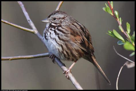common birds in your neck of the woods birds in