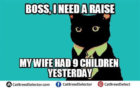 business meme business cat memes cat breed selector