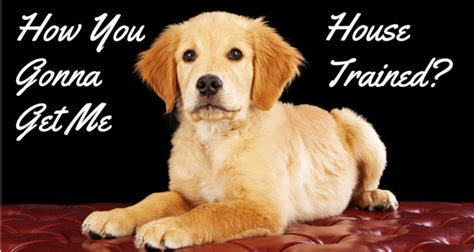 best house for golden retriever golden retriever obedience crate and house tips
