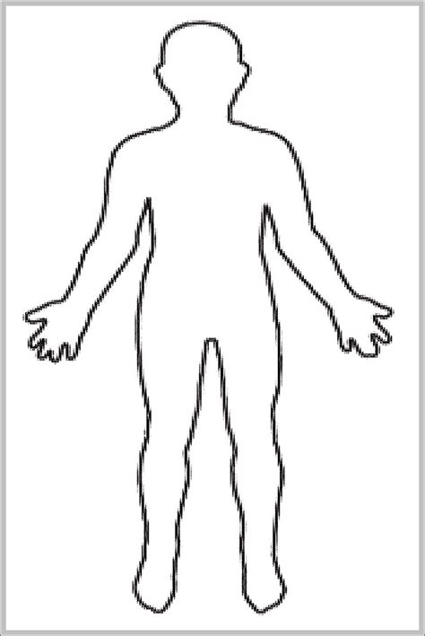 female human body diagram