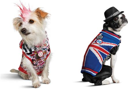 petco clothes gwen stefani unveils clothing line for dogs with petco metro news