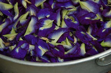 best flower food bunga telang blue pea clitoria flower food dye