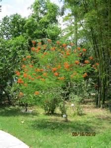 plant curator tropical florida gardens
