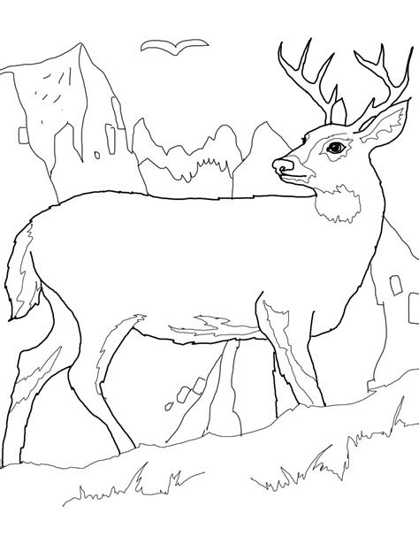 Deer Color Page free printable deer coloring pages for