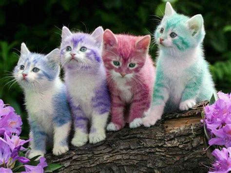 beautiful kittens free download lovely and beautiful cats hd wallpapers hd