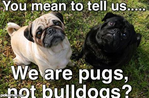Sad Pug Meme - pokeme meme generator find and create memes