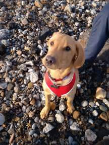 what to ask when buying a puppy questions to ask when buying a puppy 171 singletrack forum