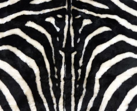 Faux Zebra Skin Rug by Faux Fur Zebra Hide Rug From 5 X 7 Black White