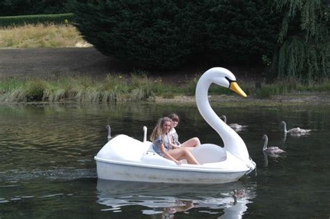 swan boats and daisy chains 1000 images about ship shape i on pinterest shipwreck
