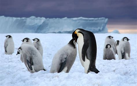 animals in the winter 30 beautiful winter wallpapers backgrounds images