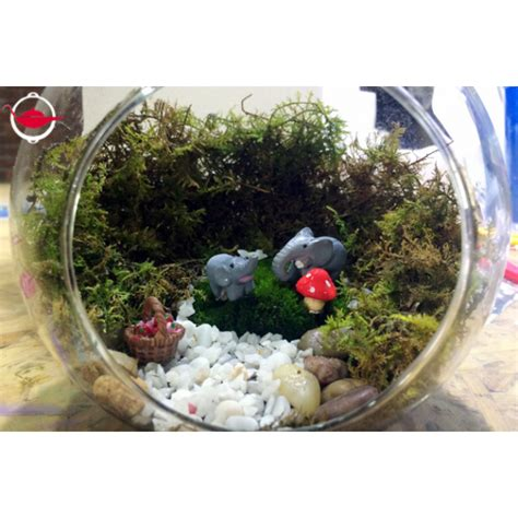 make your own moss terrarium spoilt experience gifts