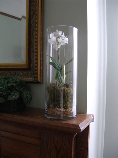 using cylinder clear glass vase for
