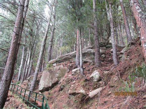 Forest Mba Reviews by Through The Pine Forest To The Falls Picture Of
